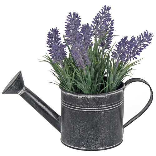 Lavender Plant in Watering Can August Grove