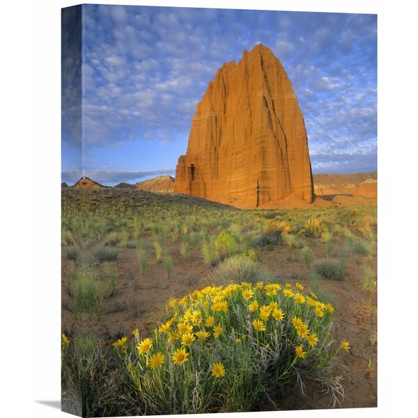 Nature Photographs Common Sunflowers and Temple of The Sun, Capitol Reef Np, Utah by Tim Fitzharris Photographic Print on Wrapped Canvas by Global Gallery