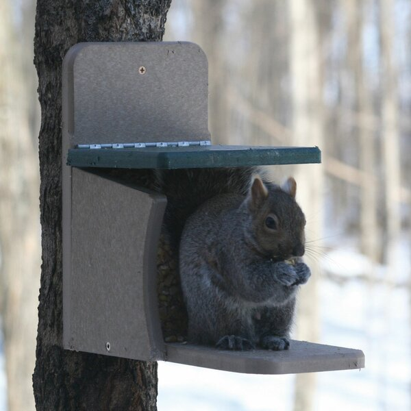 Recycled Munch Box Squirrel Feeder by Birds Choice