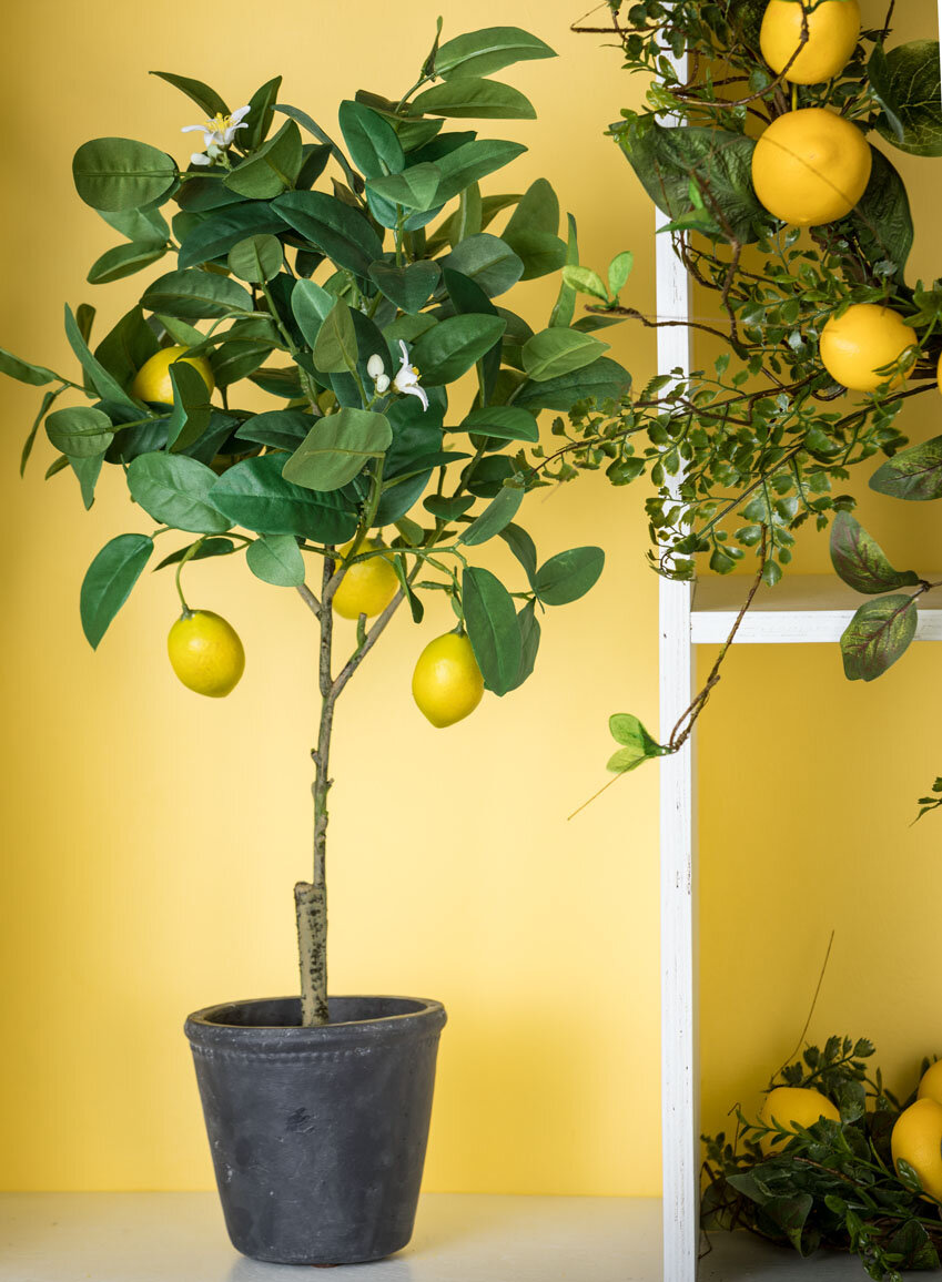Floor Lemon Tree In Pot Reviews Joss Main