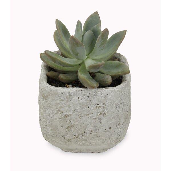 Regan Square Concrete Pot Planter by Bloomsbury Market