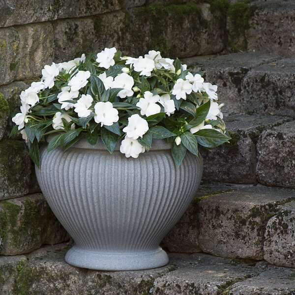 Hollifield Resin Pot Planter by Charlton Home