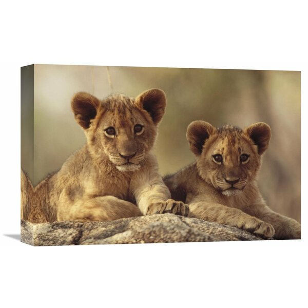 Nature Photographs African Lion Cubs Resting on a Rock, Hwange National Park, Zimbabwe, Africa Photographic Print on Wrapped Canvas by Global Gallery