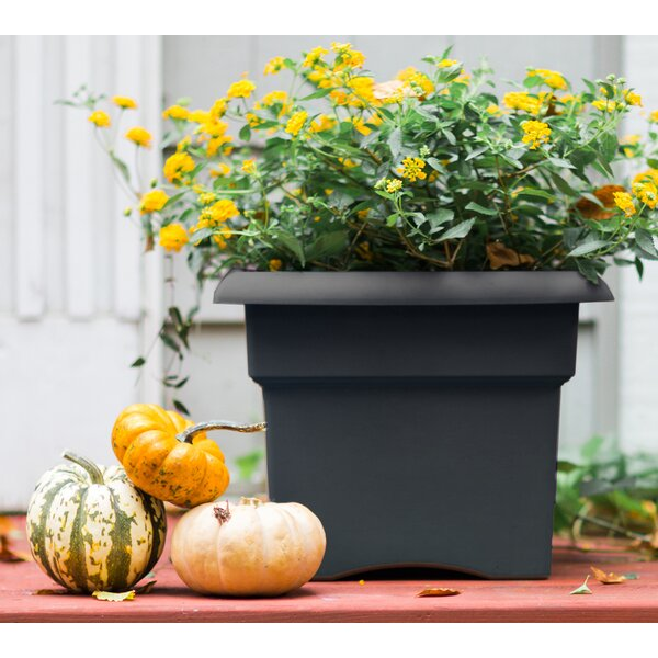 Veranda Plastic Planter Box by Bloem