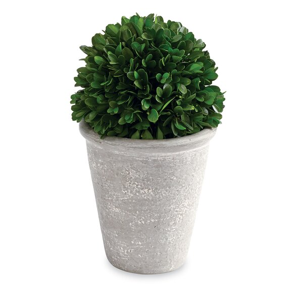 Preserved Desktop Boxwood Topiary by Mud Pie™