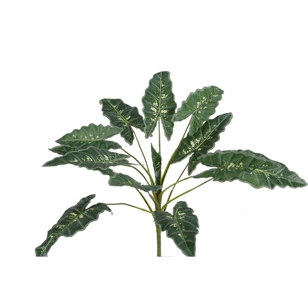 Prayer Plam Bush Desk Top Plant by Admired by Nature