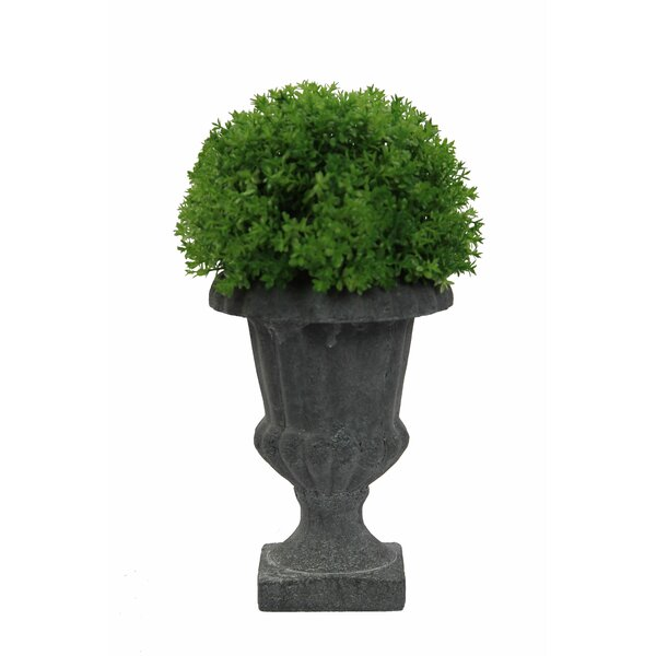 Faux Thyme Floor Boxwood Topiary in Urn by Admired by Nature