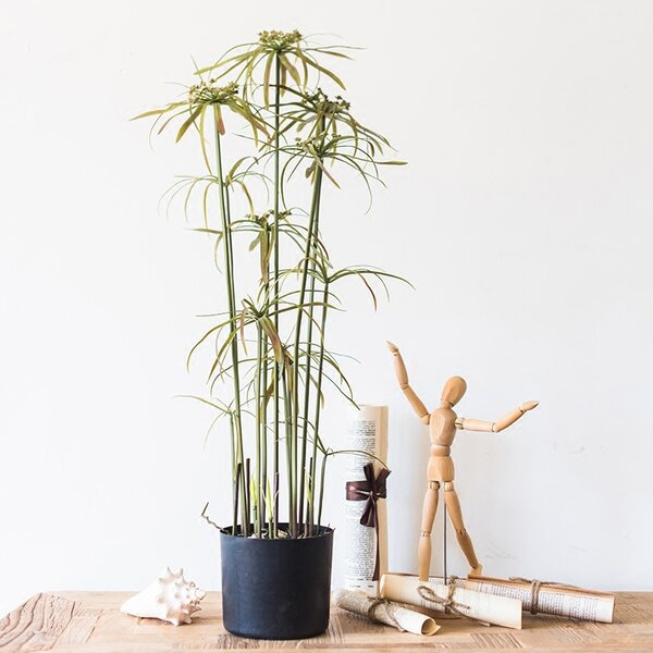 Star Bamboo Bonsai Plant in Pot by Bay Isle Home