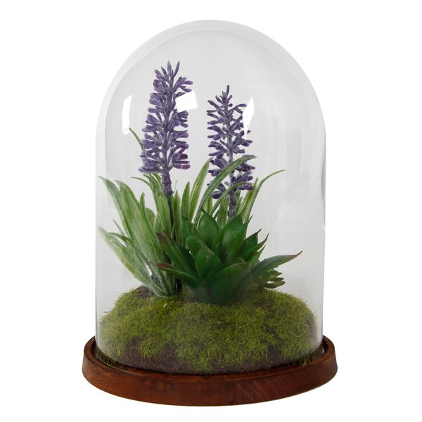 Glass Cover Desktop Succulent Plant by Charlton Home