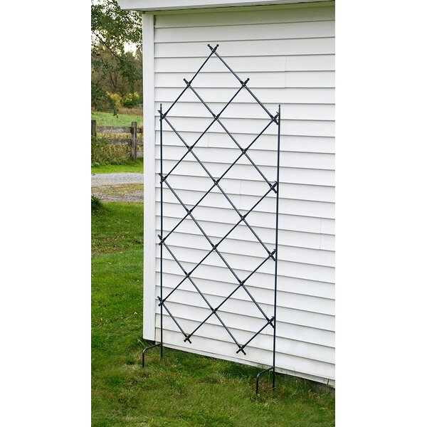 Iron Lattice Panel Trellis by ACHLA