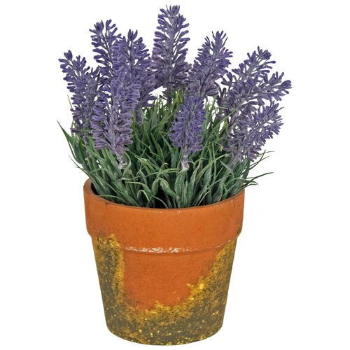 Lavender Plant in Pot August Grove