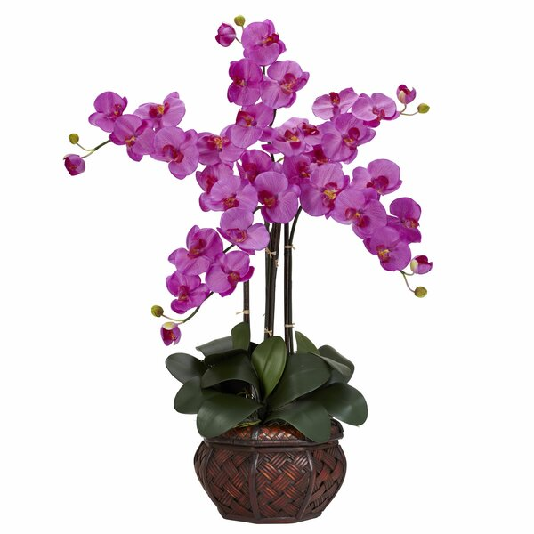 Phalaenopsis with Decorative Vase Silk Flower Arrangement by Nearly Natural