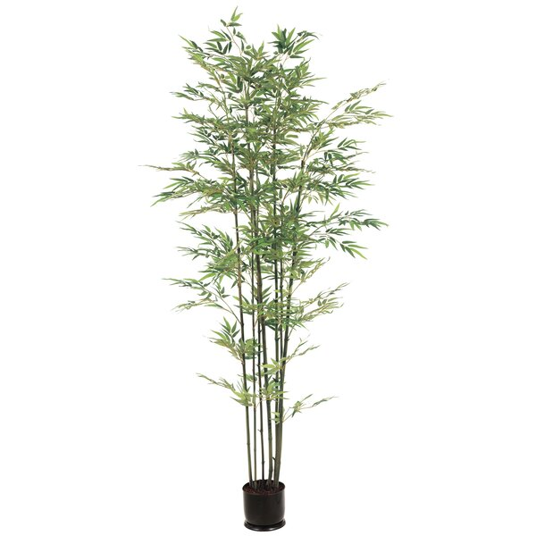 84'' Bamboo Tree in Pot by Bloomsbury Market