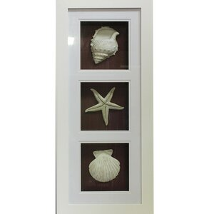 MDF 'Seashell' Wall Art on Shadow Box by ESSENTIAL DÉCOR & BEYOND, INC