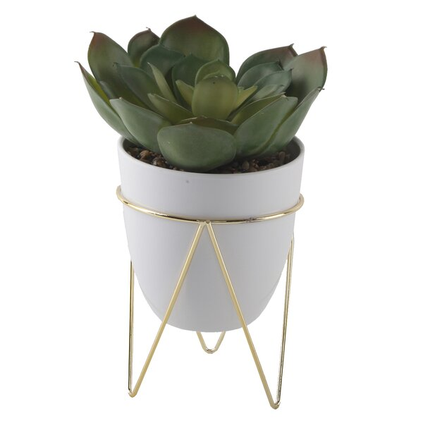 Desktop Succulent Plant in Pot by George Oliver
