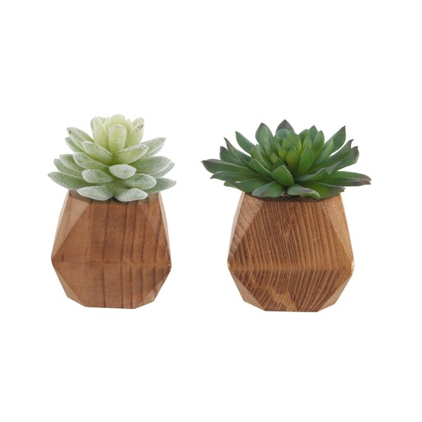 2 Piece Desktop Succulent Plant Set in Pot by Wrou