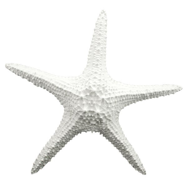 Superieur Beachcrest Home Starfish Wall Décor U0026 Reviews | Wayfair