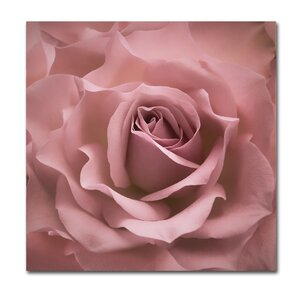 Misty Rose Pink Rose by Cora Niele Photographic Print on Wrapped Canvas by Trademark Fine Art