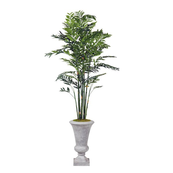 Bamboo Tree Cement Foliage Plant in Urn by Darby Home Co