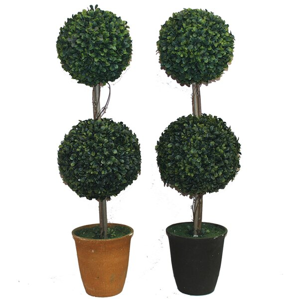 Double Ball Boxwood Floor Topiary in Pot by Darby Home Co