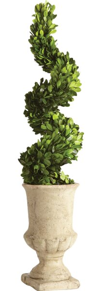 Spiral Topiary in Urn by One Allium Way