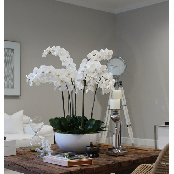 Phalaenopsis Orchid Floral Arrangement in Planter by House of Hampton