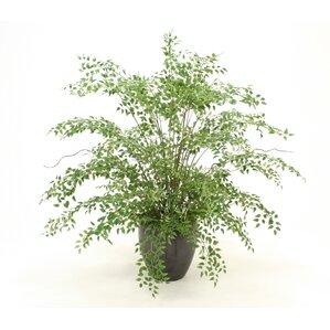 Emejing Indoor Plant Arrangements Pictures - Amazing House ...