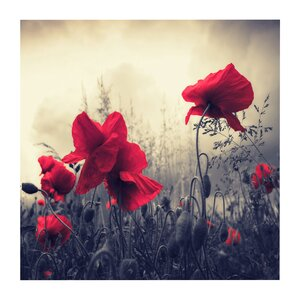 Red For Love' by Philippe Sainte-Laudy Framed Photo Graphic Print on Canvas by Trademark Fine Art