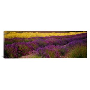 'Lavender and Flower Fields, Sequim, Washington' Photographic Print on Canvas by East Urban Home