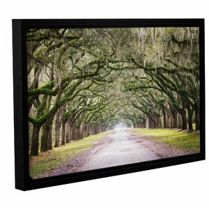 'Oak Trees with Spanish Moss in Savanna Georgia' by Cody York Framed Photographic Print on Wrapped Canvas by Loon Peak