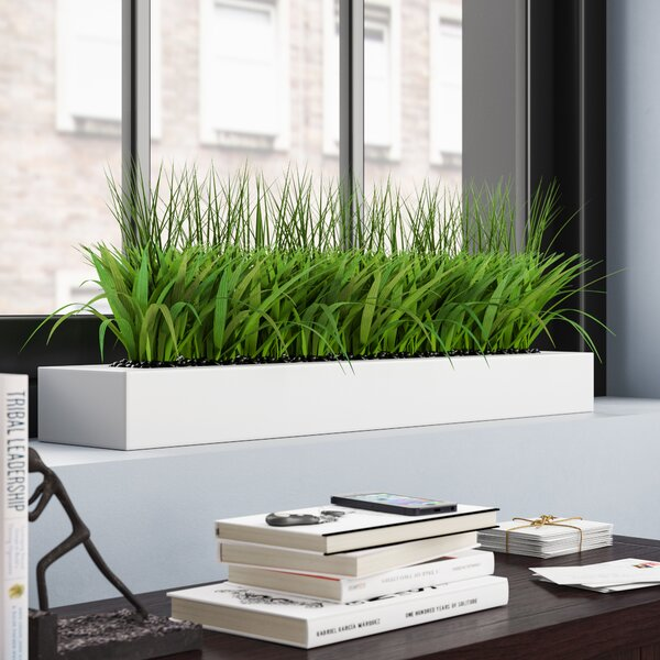 Desktop Grass in Planter by Orren Ellis