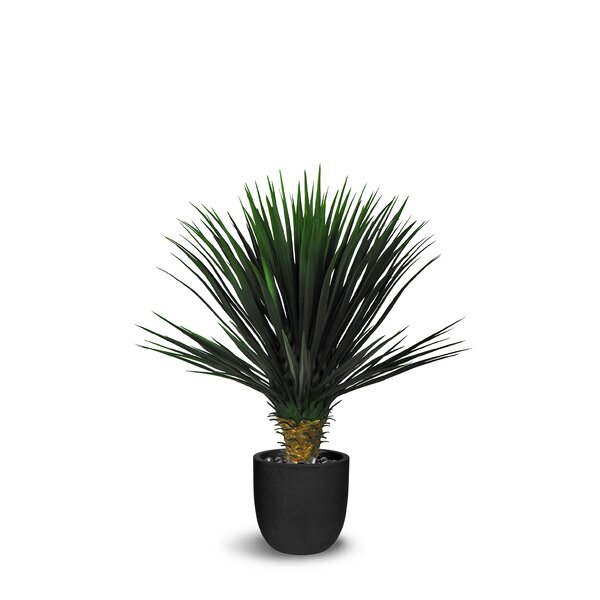Yucca Rostrata Floor Succulent Tree in Pot by Bay Isle Home