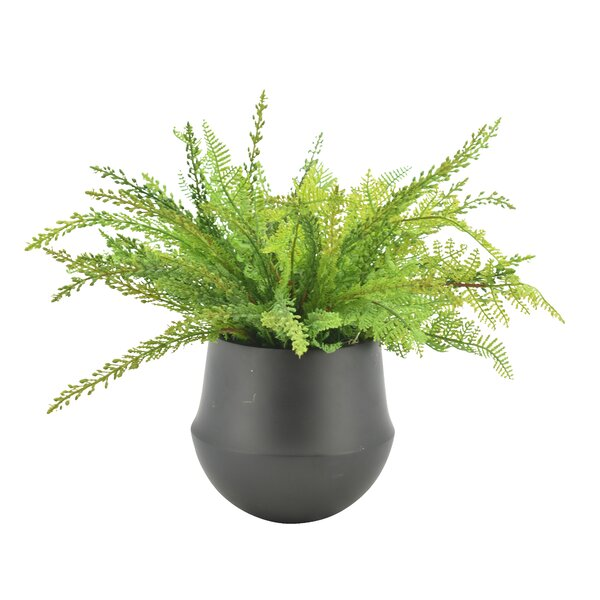 Desktop Foliage Plant in Pot by Millwood Pines