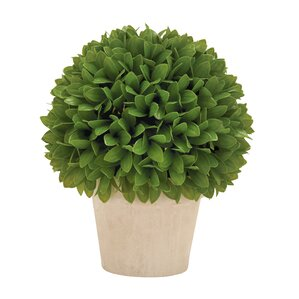 kinsley topiary plant in pot