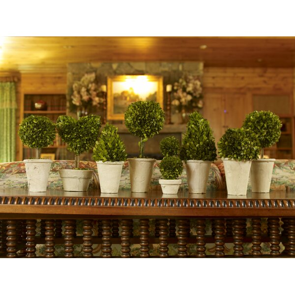 8 Piece Preserved Boxwood Topiary in Pot Set by One Allium Way