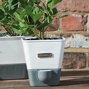 Indoor Herb Garden Kits | Wayfair