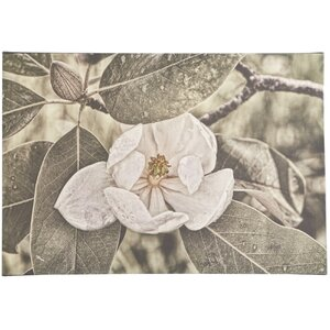 White Magnolia Wrapped Photographic Print on Canvas by Trademark Global