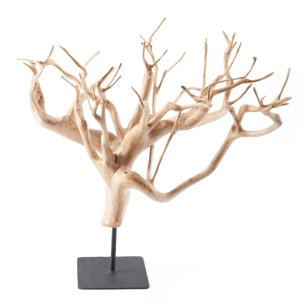 Kupang Tea Tree Assorted Sculpture by Union Rustic