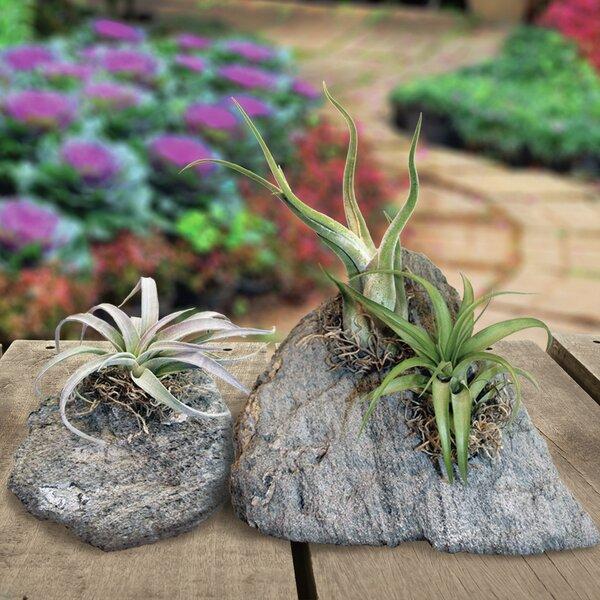 Sierra Artisan ™ 2-Piece Pumice Pot Planter Set by Featherock, Inc