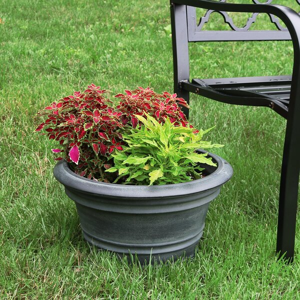 Rashad Flower Resin Pot Planter by Charlton Home
