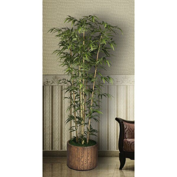 Tall Bamboo Tree in Planter by Bungalow Rose