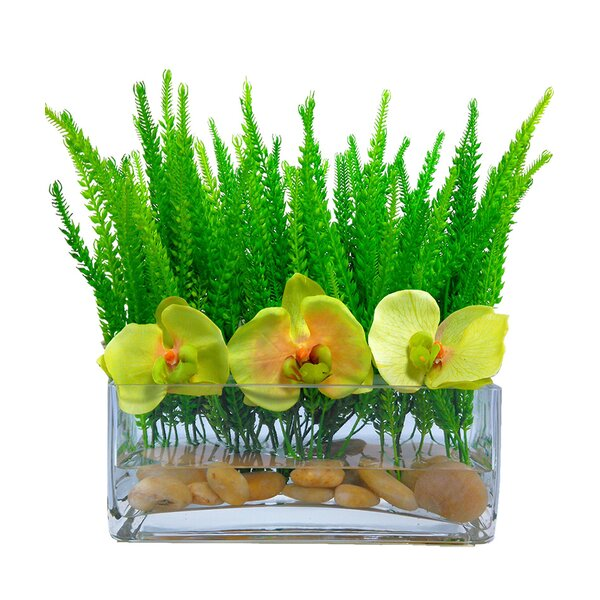 Phalaenopsis Orchid Grass Floral Arrangement in Vase by Bloomsbury Market