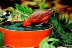 Wild Deluxe Sipper Solar and Heated Birdbath by Happy Bird Corporation