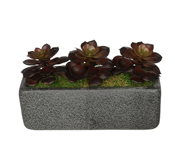 Artificial Burgundy Echeveria Plant in Decorative Vase by House of Silk Flowers Inc.