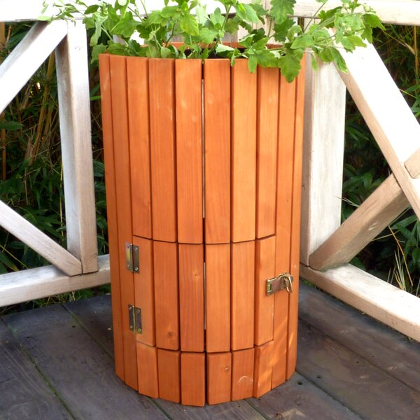 Potato Canadian Hemlock Pot Planter by Merry Products