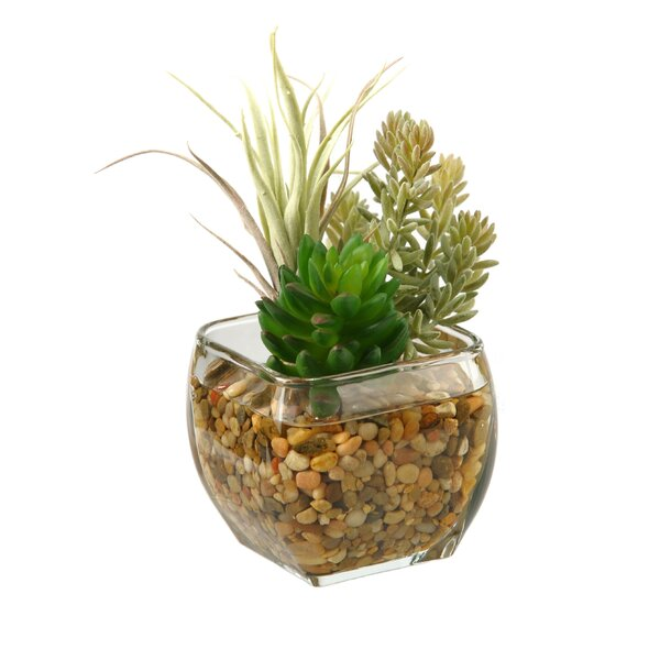 Succulent and Flocked Burro Tail in Glass Cube by D & W Silks