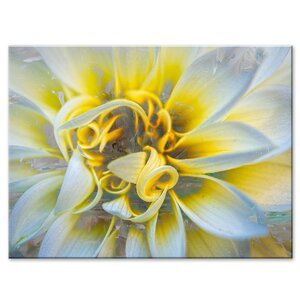 'Painted Petals XXXVII' Graphic Art on Wrapped Canvas by Ready2hangart