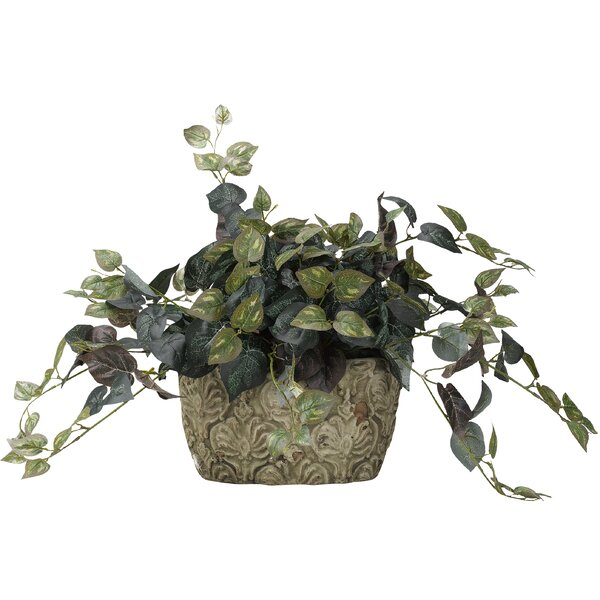 Oxalis Ceramic Floor Ivy Plant in Planter by Bloomsbury Market