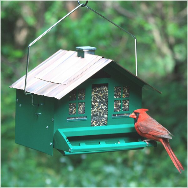 Squirrel-Be-Gone Home Style Hopper Bird Feeder by