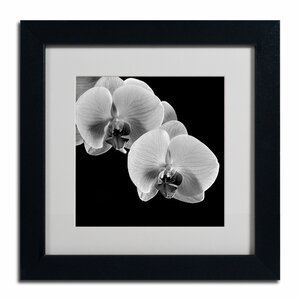 Orchids by Michael Harrison Framed Photographic Print by Trademark Fine Art